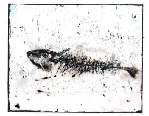 sardine-1.jpg